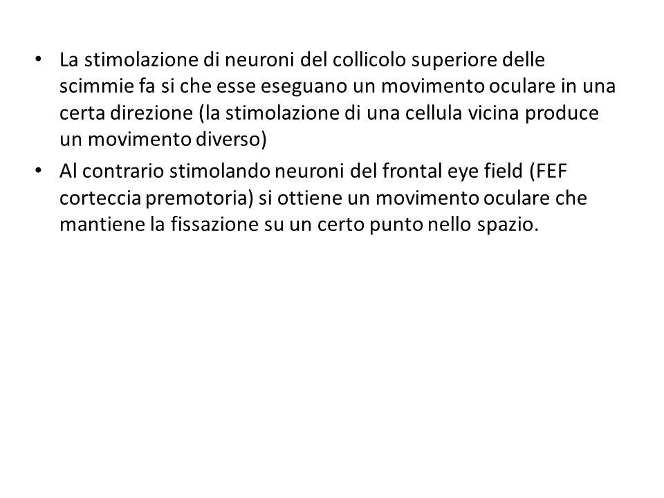La stimolazione di neuroni del collicolo superiore delle scimmie fa si che esse eseguano un movimento oculare in una certa direzione (la stimolazione di una cellula vicina produce un movimento diverso)
