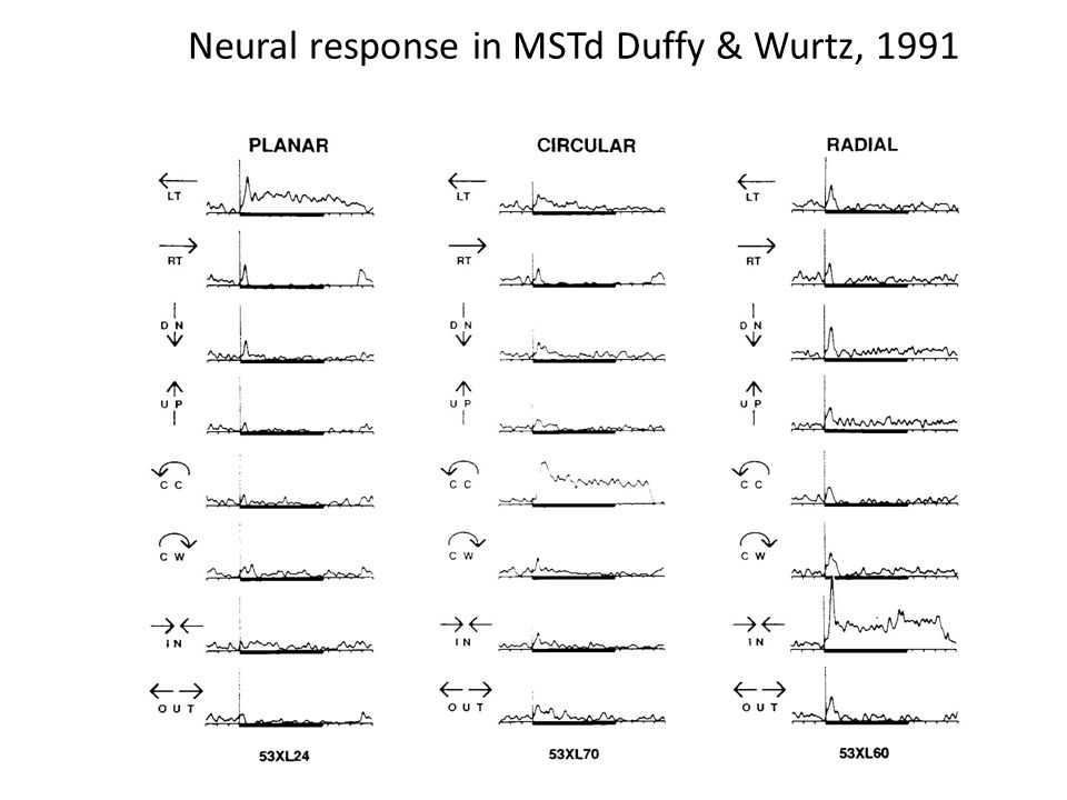 Neural response in MSTd Duffy & Wurtz, 1991