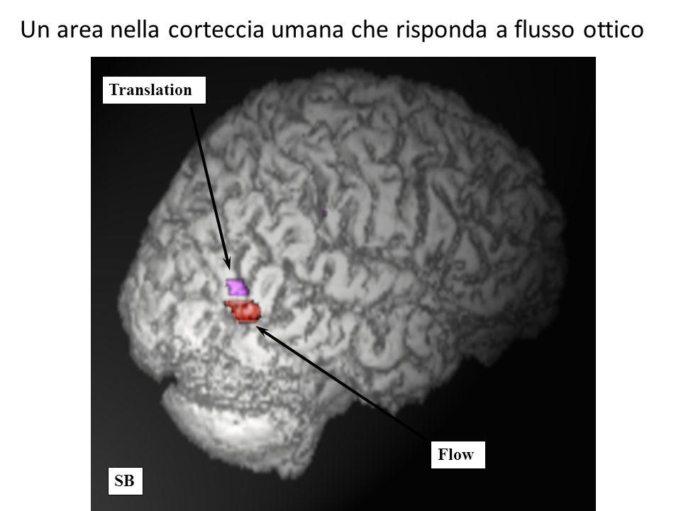 Un area nella corteccia umana che risponda a flusso ottico
