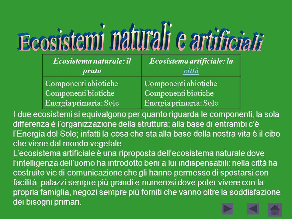 Ecosistema naturale: il prato Ecosistema artificiale: la città