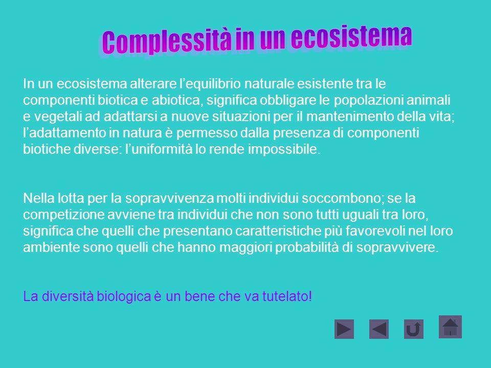 Complessità in un ecosistema