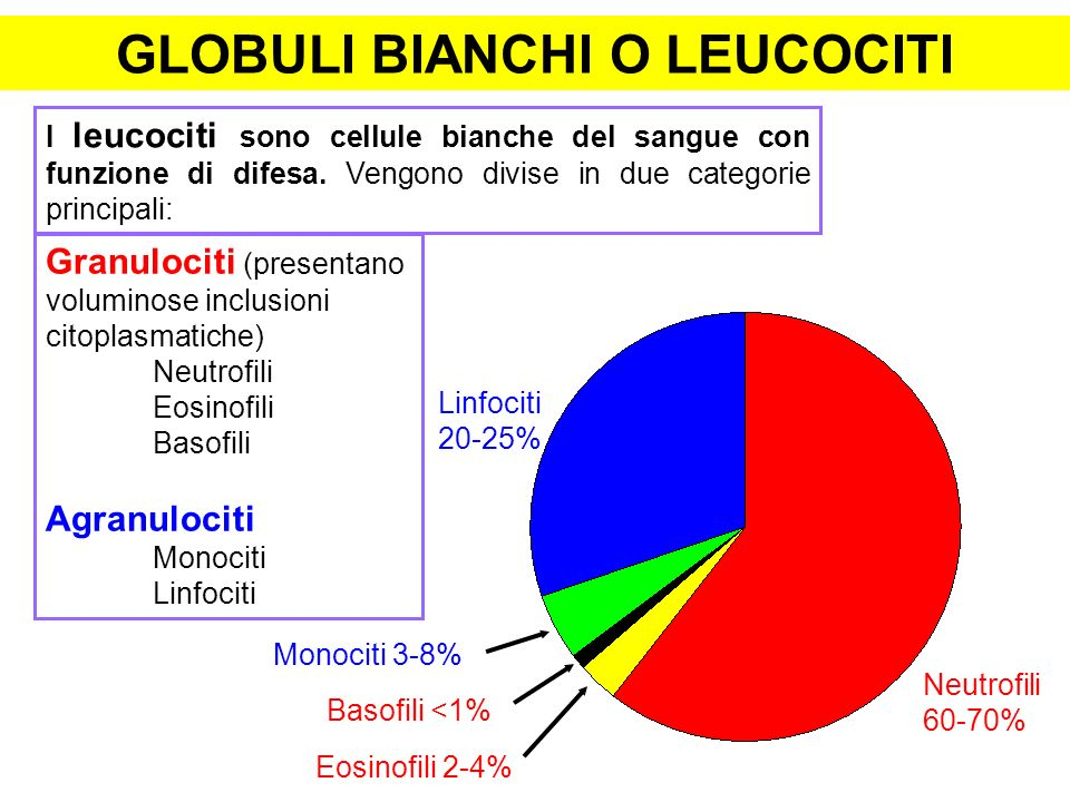 Globuli bianchi o leucociti