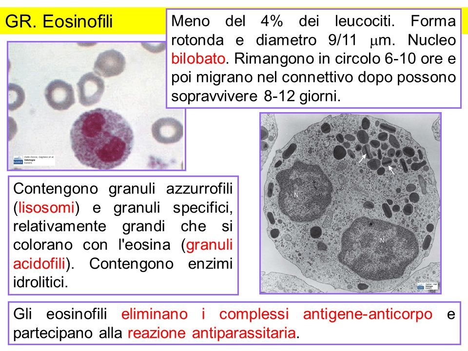 GR. Eosinofili