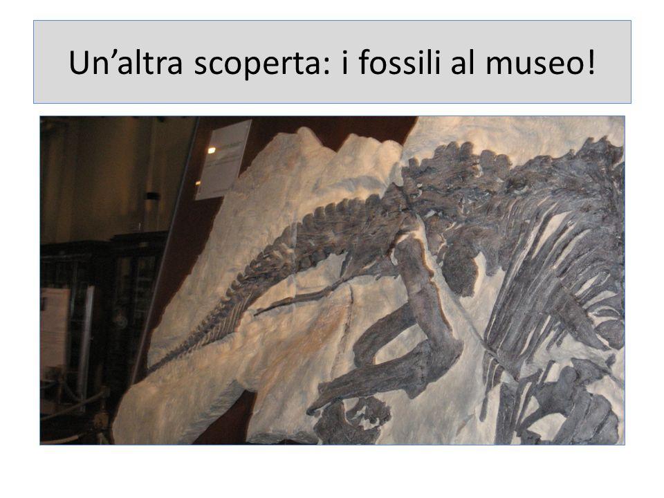 Un'altra scoperta: i fossili al museo!