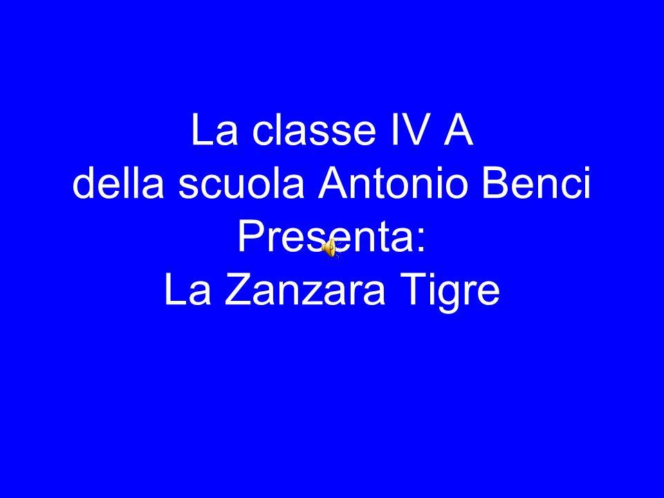 La classe IV A della scuola Antonio Benci Presenta: La Zanzara Tigre