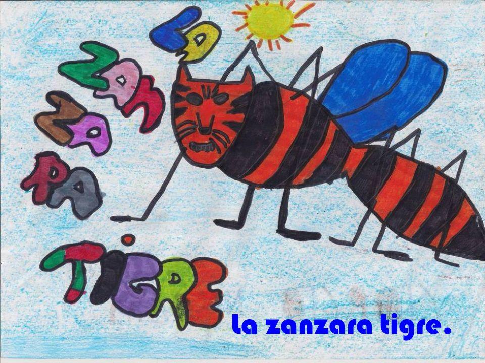 La zanzara tigre.