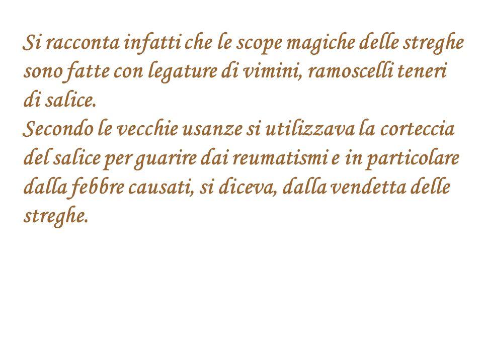 Si racconta infatti che le scope magiche delle streghe sono fatte con legature di vimini, ramoscelli teneri di salice.