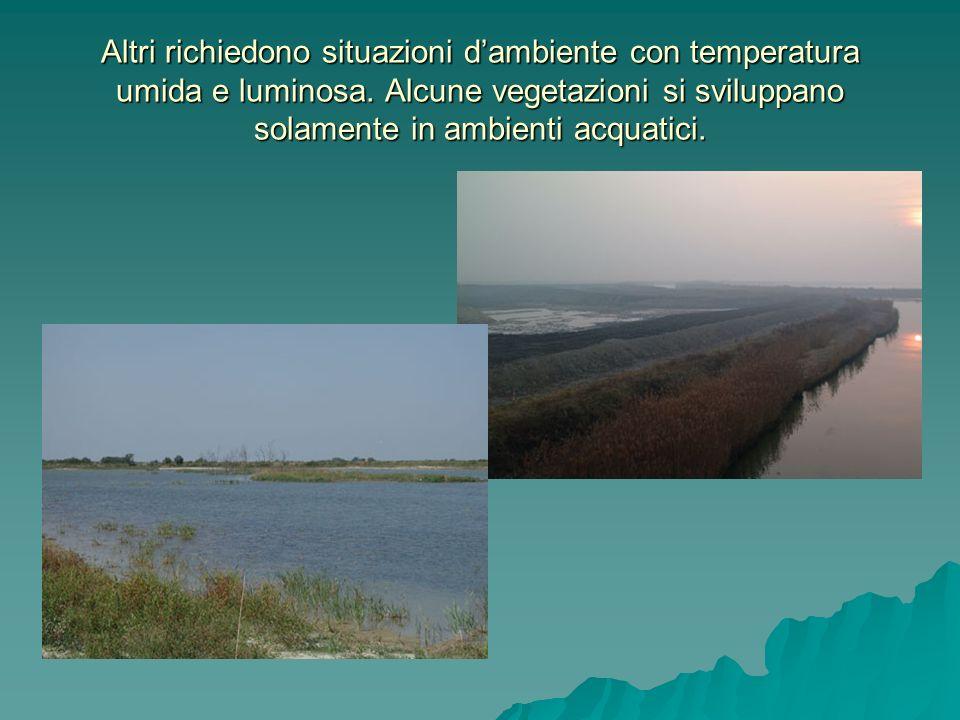 Altri richiedono situazioni d'ambiente con temperatura umida e luminosa.