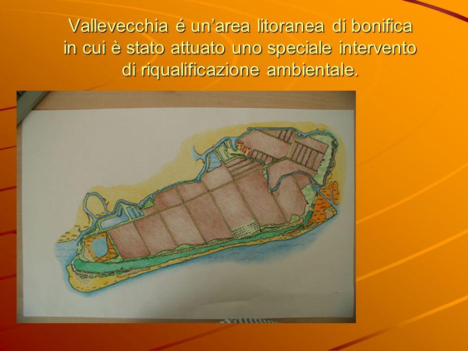 Vallevecchia é un'area litoranea di bonifica in cui è stato attuato uno speciale intervento di riqualificazione ambientale.