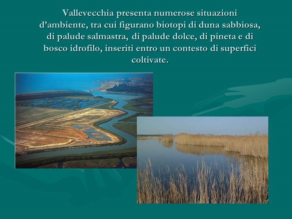 Vallevecchia presenta numerose situazioni d'ambiente, tra cui figurano biotopi di duna sabbiosa, di palude salmastra, di palude dolce, di pineta e di bosco idrofilo, inseriti entro un contesto di superfici coltivate.