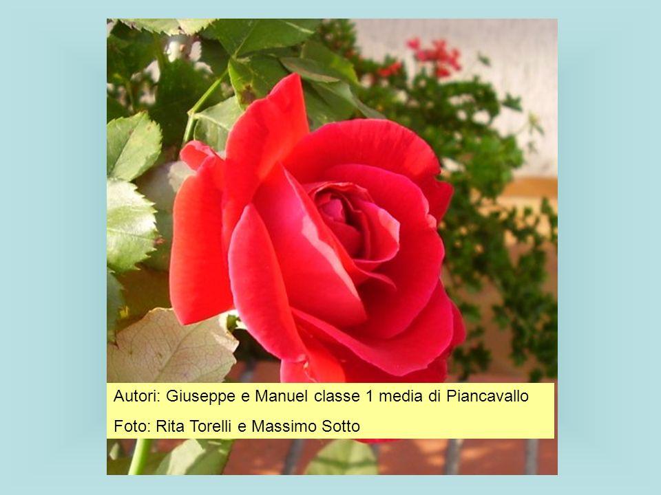 Autori: Giuseppe e Manuel classe 1 media di Piancavallo
