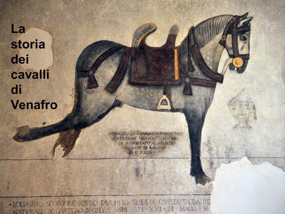 La storia dei cavalli di Venafro