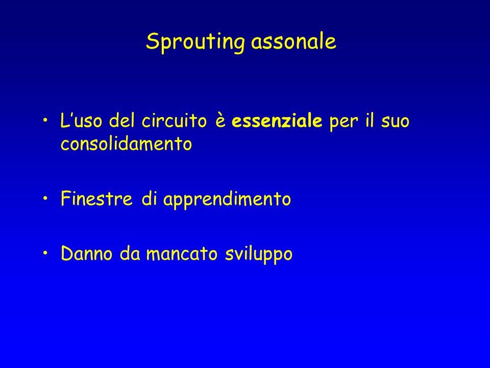 Sprouting assonale L'uso del circuito è essenziale per il suo consolidamento. Finestre di apprendimento.