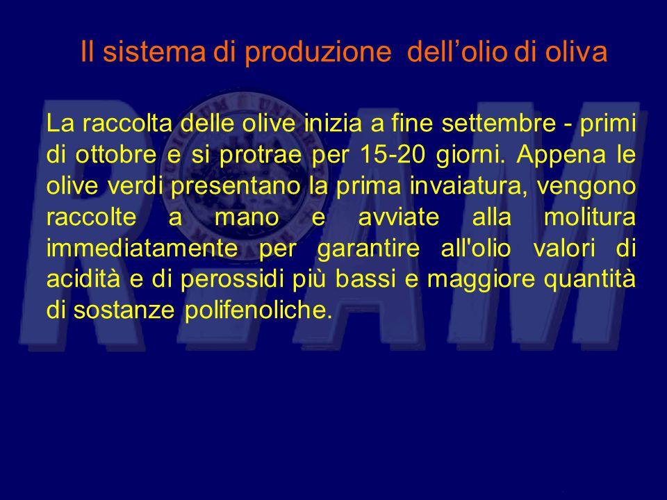 Il sistema di produzione dell'olio di oliva
