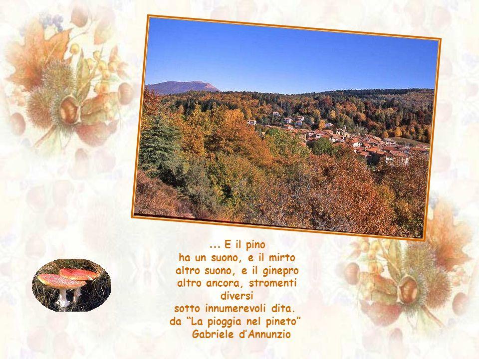 da La pioggia nel pineto Gabriele d'Annunzio