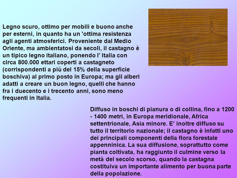 Legno scuro, ottimo per mobili e buono anche per esterni, in quanto ha un ottima resistenza agli agenti atmosferici. Proveniente dal Medio Oriente, ma ambientatosi da secoli, il castagno è un tipico legno italiano, ponendo l Italia con circa 800.000 ettari coperti a castagneto (corrispondenti a più del 15% della superficie boschiva) al primo posto in Europa; ma gli alberi adatti a creare un buon legno, quelli che hanno fra i duecento e i trecento anni, sono meno frequenti in Italia.