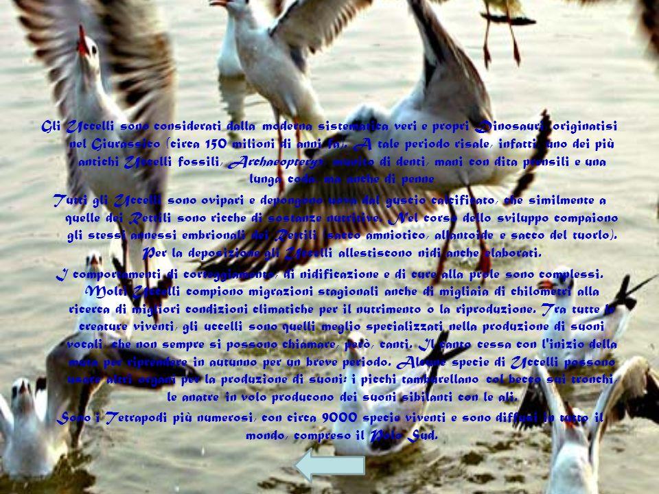 Gli Uccelli sono considerati dalla moderna sistematica veri e propri Dinosauri, originatisi nel Giurassico (circa 150 milioni di anni fa). A tale periodo risale, infatti, uno dei più antichi Uccelli fossili, Archaeopteryx, munito di denti, mani con dita prensili e una lunga coda, ma anche di penne
