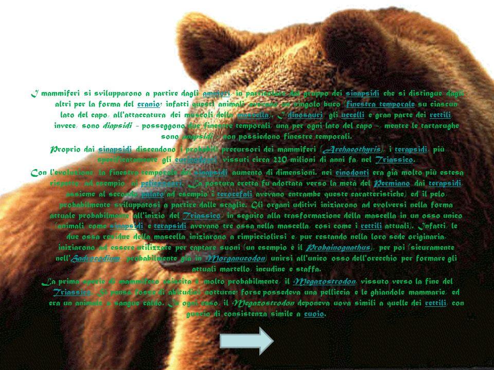 I mammiferi si svilupparono a partire dagli amnioti, in particolare dal gruppo dei sinapsidi che si distingue dagli altri per la forma del cranio; infatti questi animali avevano un singolo buco (finestra temporale su ciascun lato del capo, all attaccatura dei muscoli della mascella). I dinosauri, gli uccelli e gran parte dei rettili, invece, sono diapsidi - posseggono due finestre temporali, una per ogni lato del capo -, mentre le tartarughe sono anapsidi - non possiedono finestre temporali.