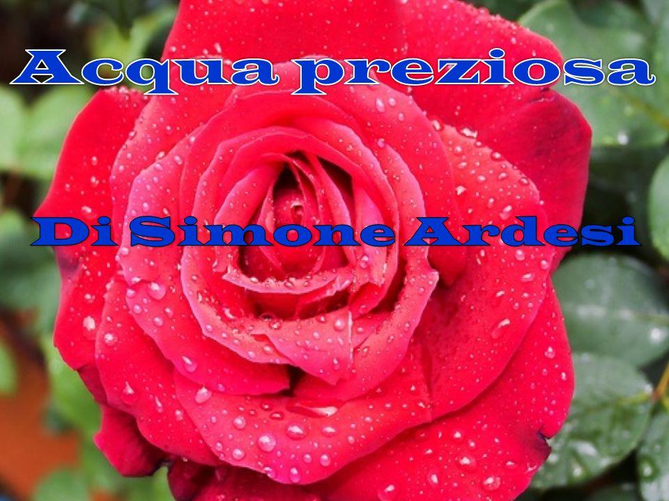 Acqua preziosa Di Simone Ardesi
