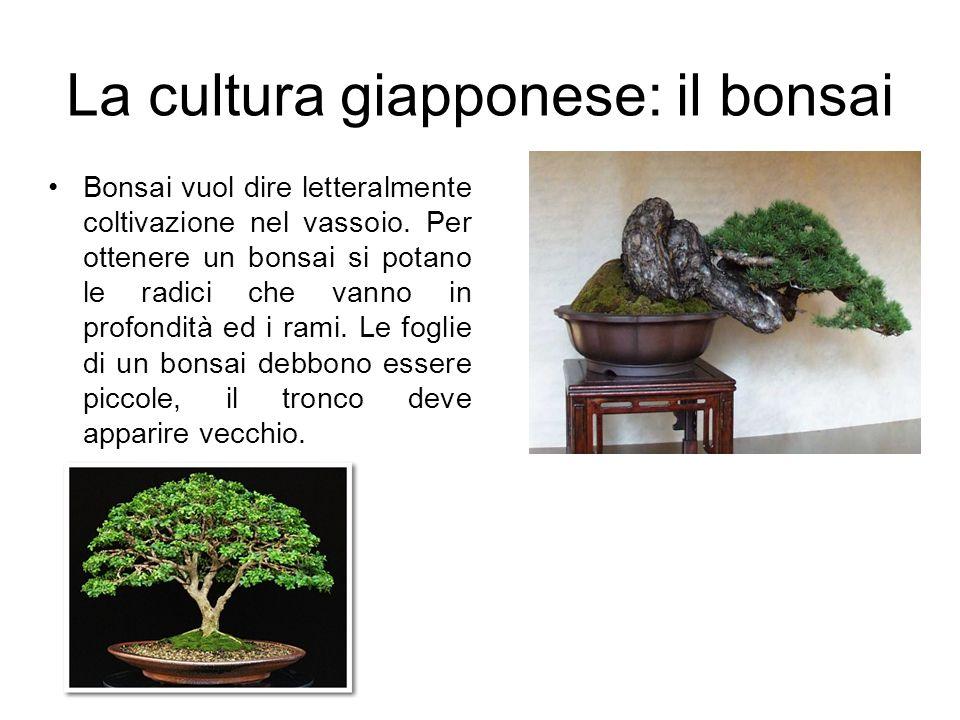 La cultura giapponese: il bonsai