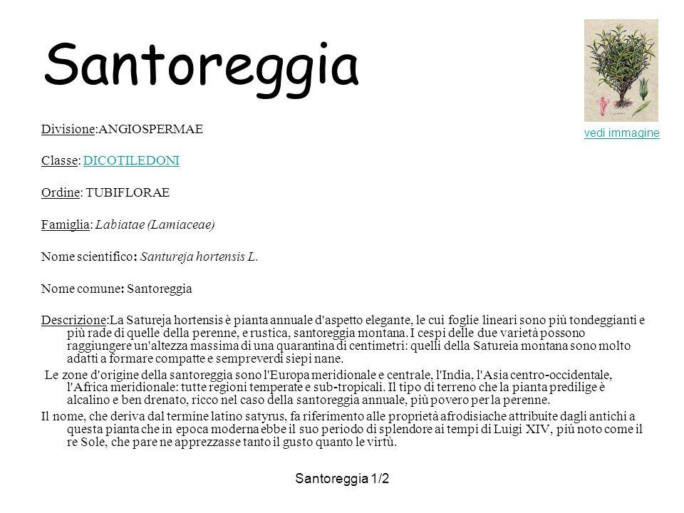 Santoreggia Divisione:ANGIOSPERMAE Classe: DICOTILEDONI