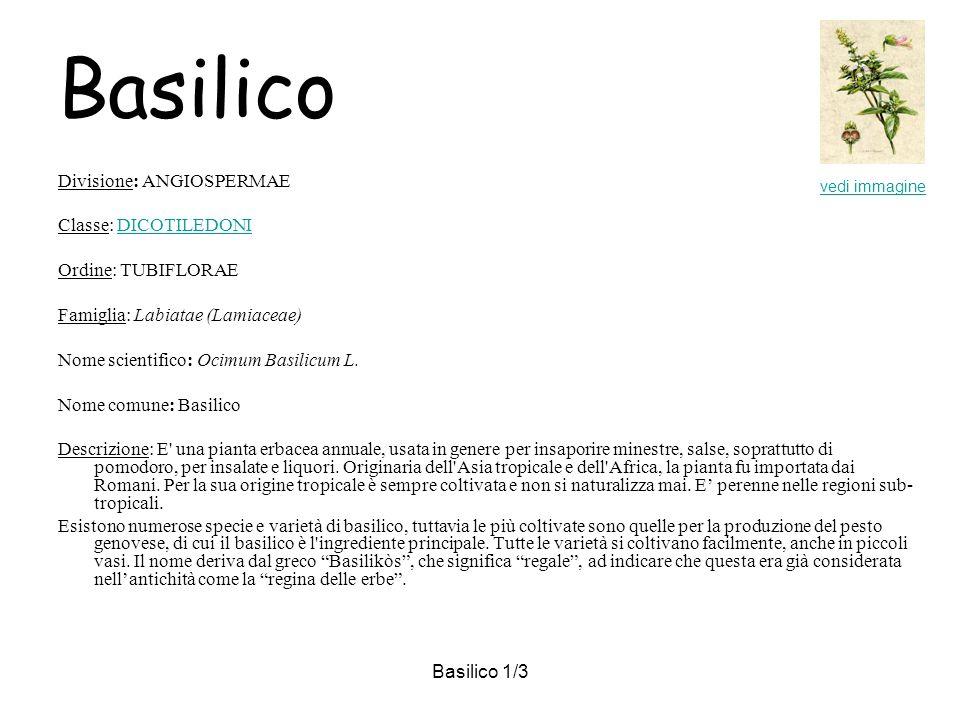 Basilico Divisione: ANGIOSPERMAE Classe: DICOTILEDONI