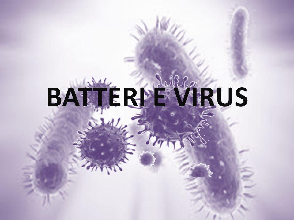 BATTERI E VIRUS