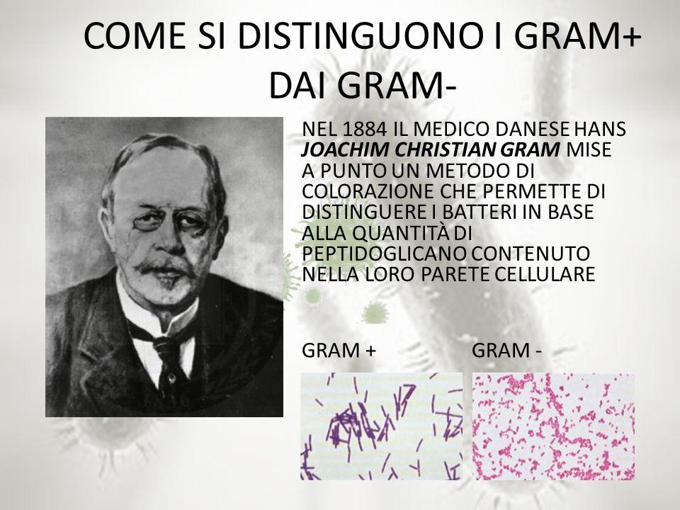 COME SI DISTINGUONO I GRAM+ DAI GRAM-