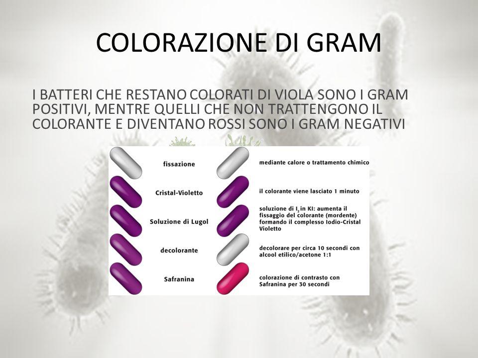 COLORAZIONE DI GRAM