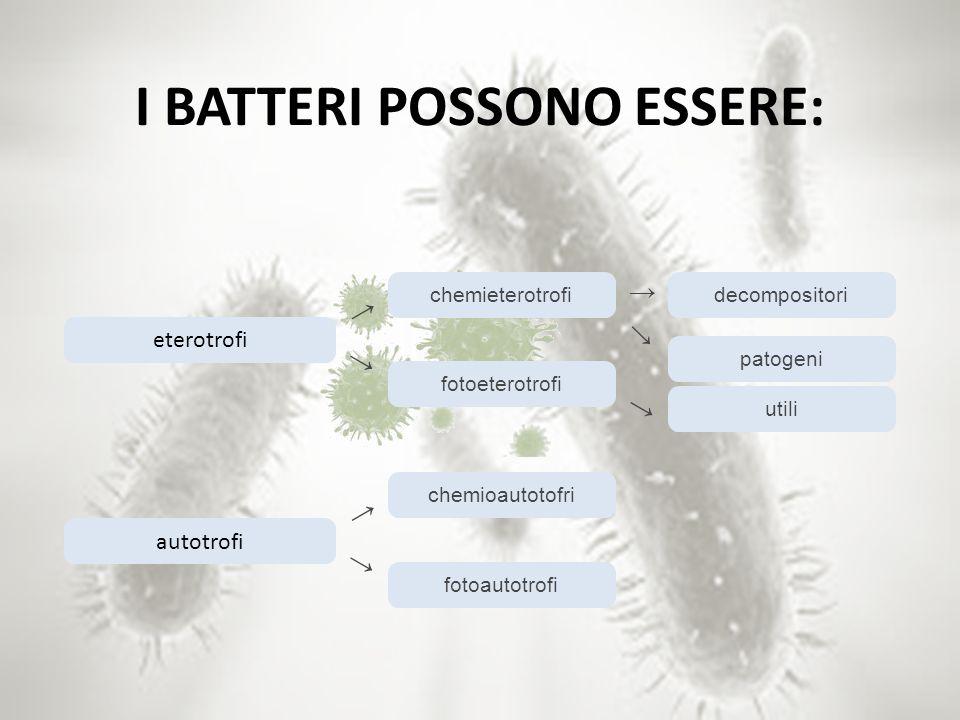 I BATTERI POSSONO ESSERE: