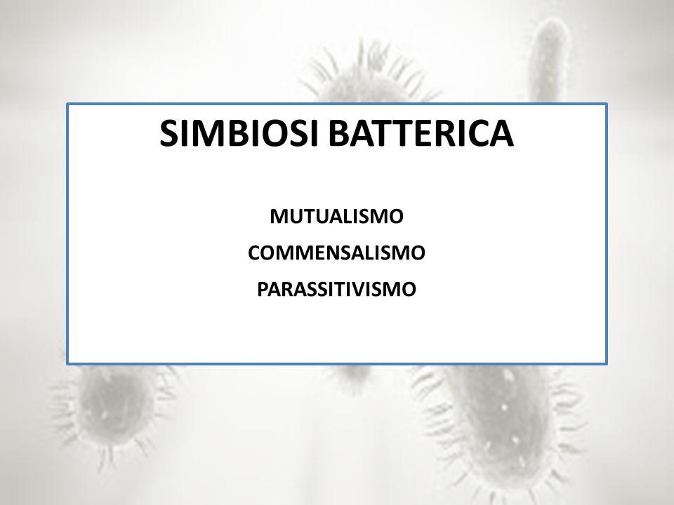 SIMBIOSI BATTERICA MUTUALISMO COMMENSALISMO PARASSITIVISMO