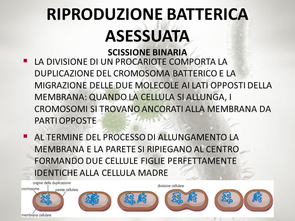 RIPRODUZIONE BATTERICA ASESSUATA SCISSIONE BINARIA