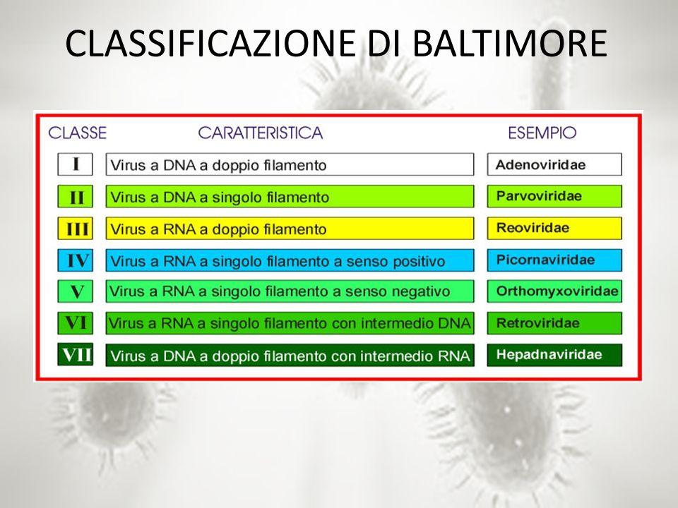 CLASSIFICAZIONE DI BALTIMORE