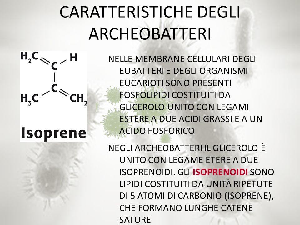 CARATTERISTICHE DEGLI ARCHEOBATTERI