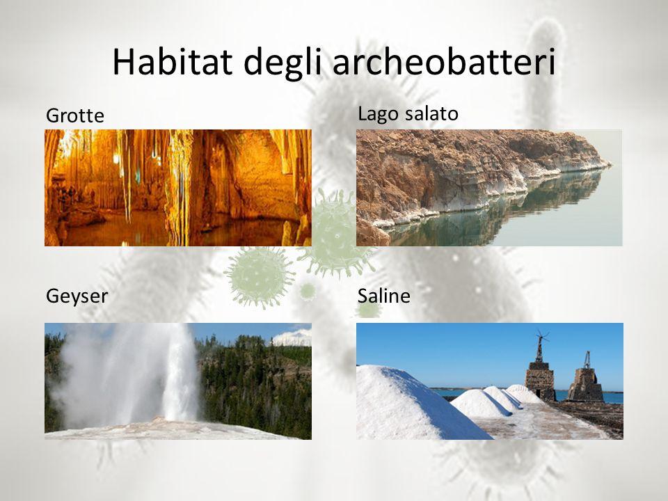 Habitat degli archeobatteri