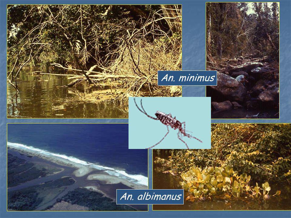 An. minimus An. albimanus