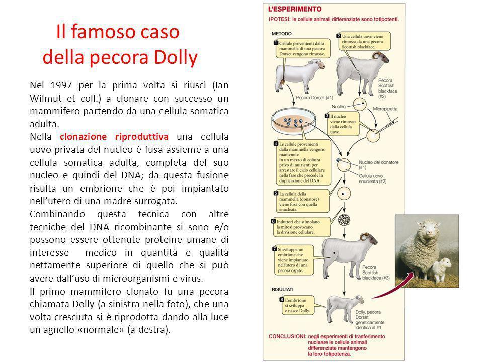 Il famoso caso della pecora Dolly