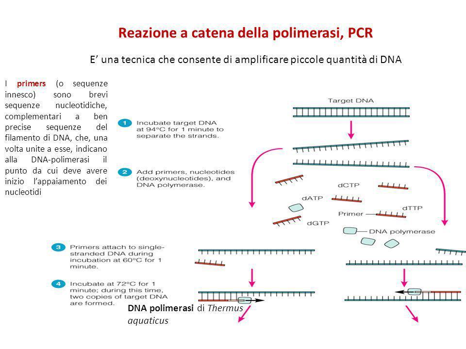 Reazione a catena della polimerasi, PCR