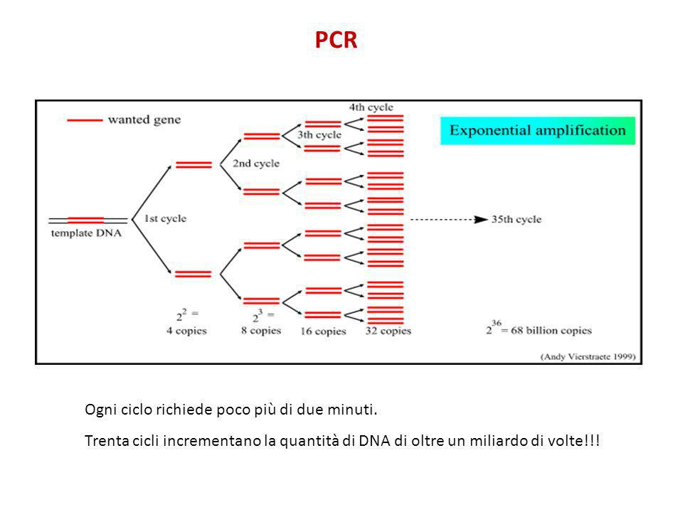 PCR Ogni ciclo richiede poco più di due minuti.