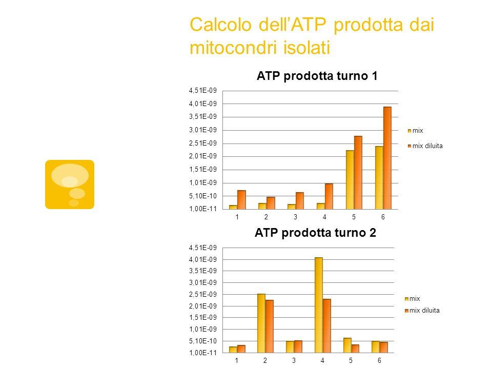 Calcolo dell'ATP prodotta dai mitocondri isolati