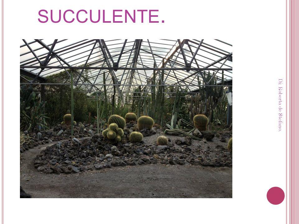 La serra delle succulente.