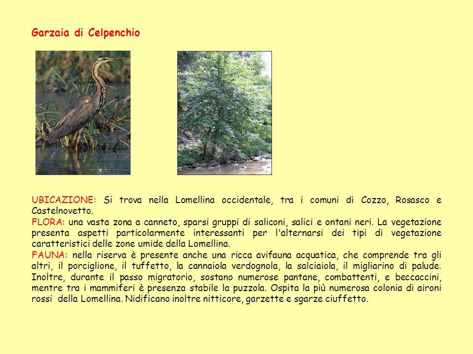 Garzaia di Celpenchio UBICAZIONE: Si trova nella Lomellina occidentale, tra i comuni di Cozzo, Rosasco e Castelnovetto.