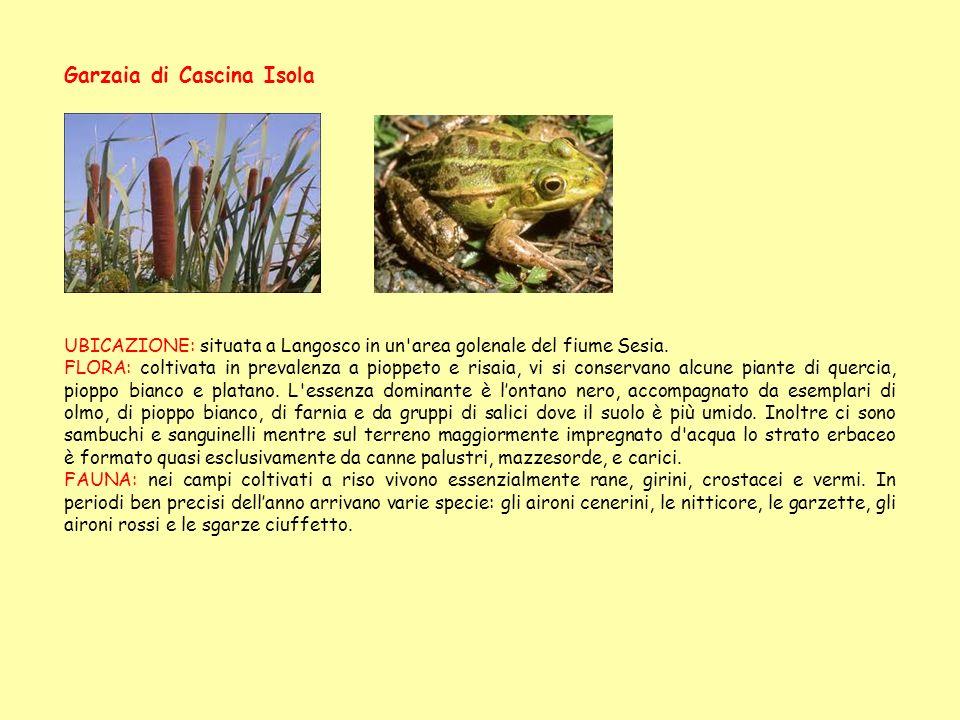 UBICAZIONE: situata a Langosco in un area golenale del fiume Sesia.