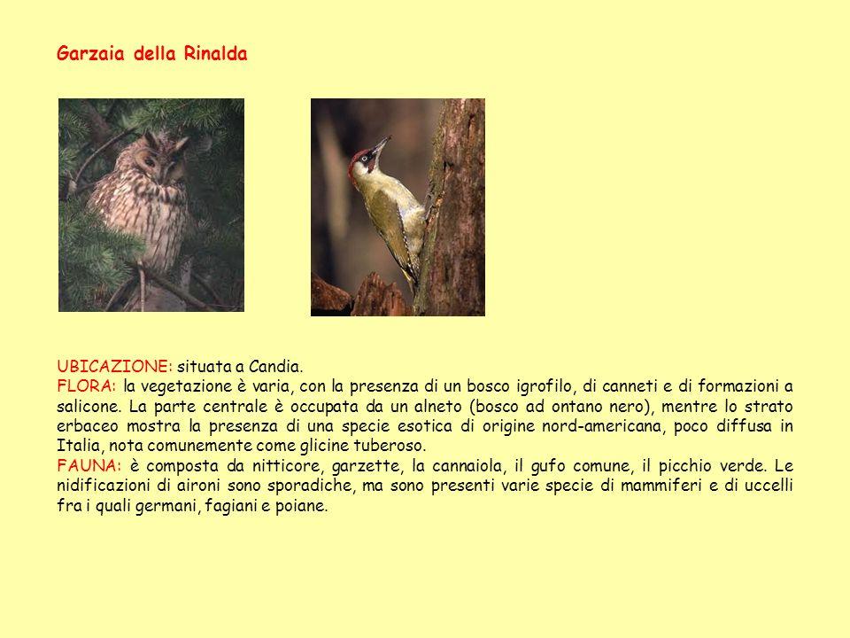 Garzaia della Rinalda UBICAZIONE: situata a Candia.