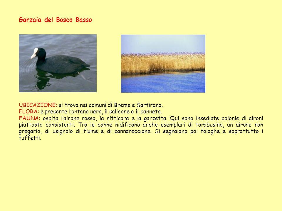 Garzaia del Bosco Basso