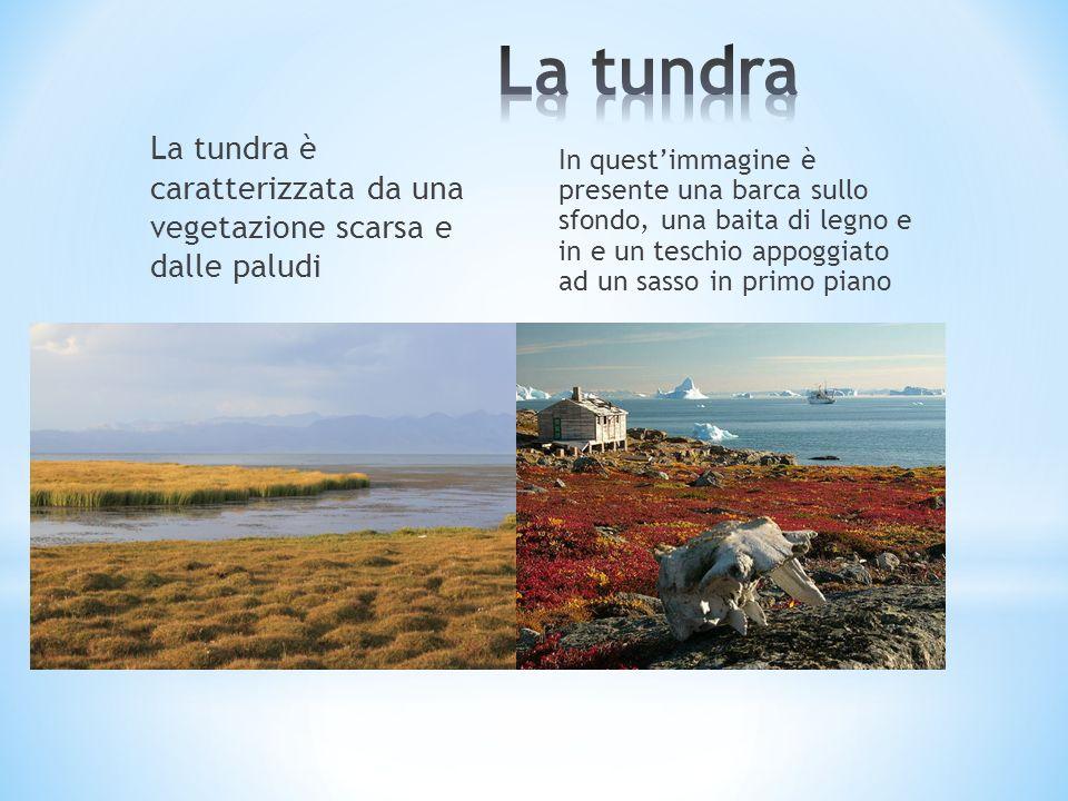 La tundra La tundra è caratterizzata da una vegetazione scarsa e dalle paludi.