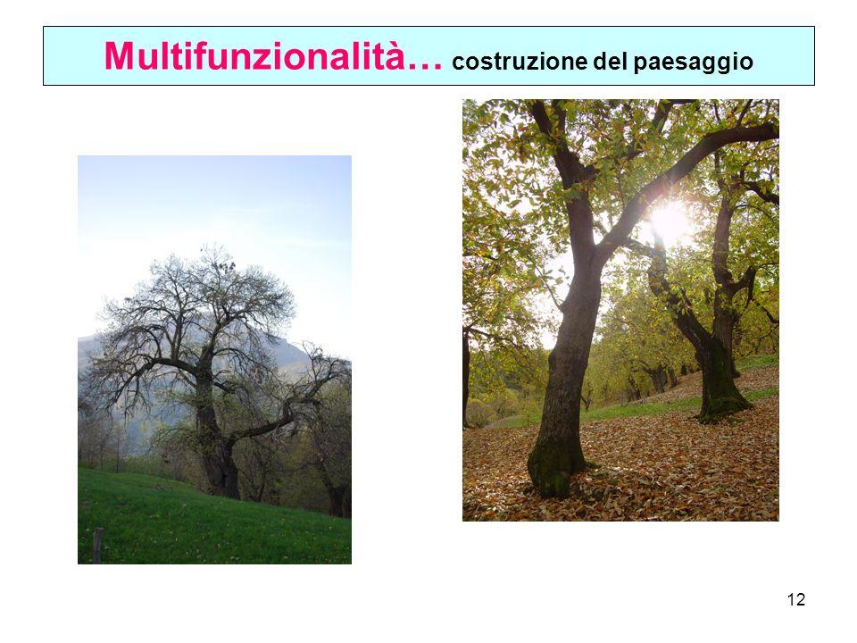 Multifunzionalità… costruzione del paesaggio