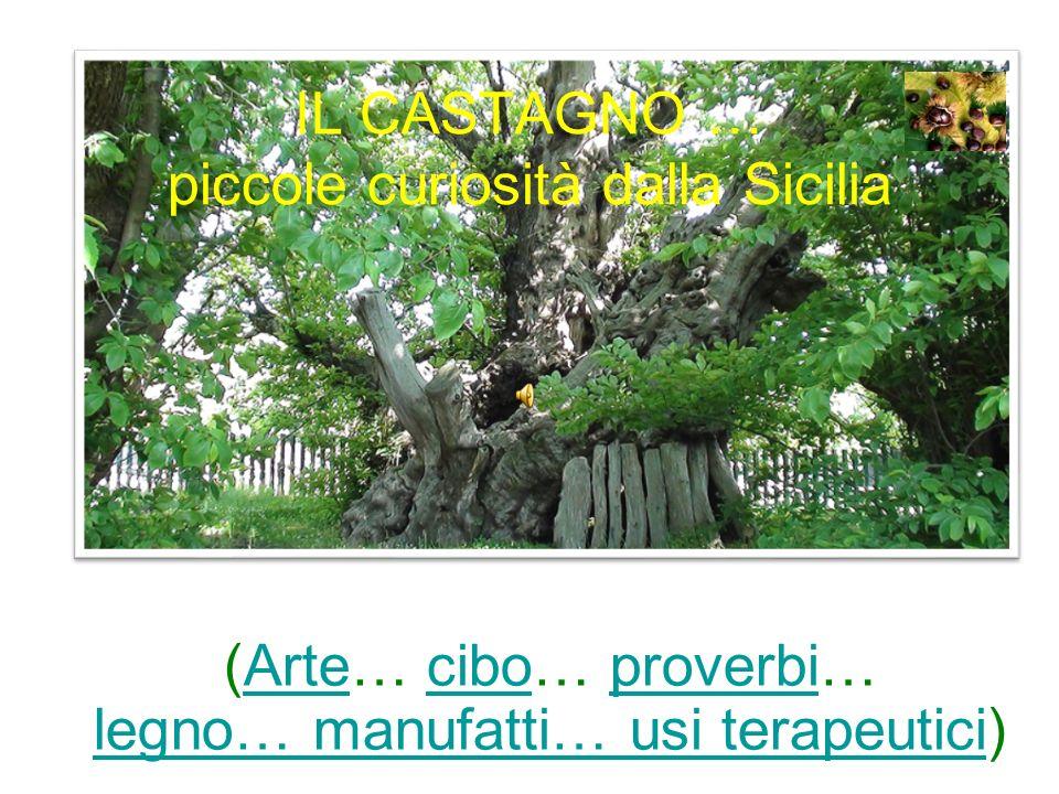 IL CASTAGNO … piccole curiosità dalla Sicilia