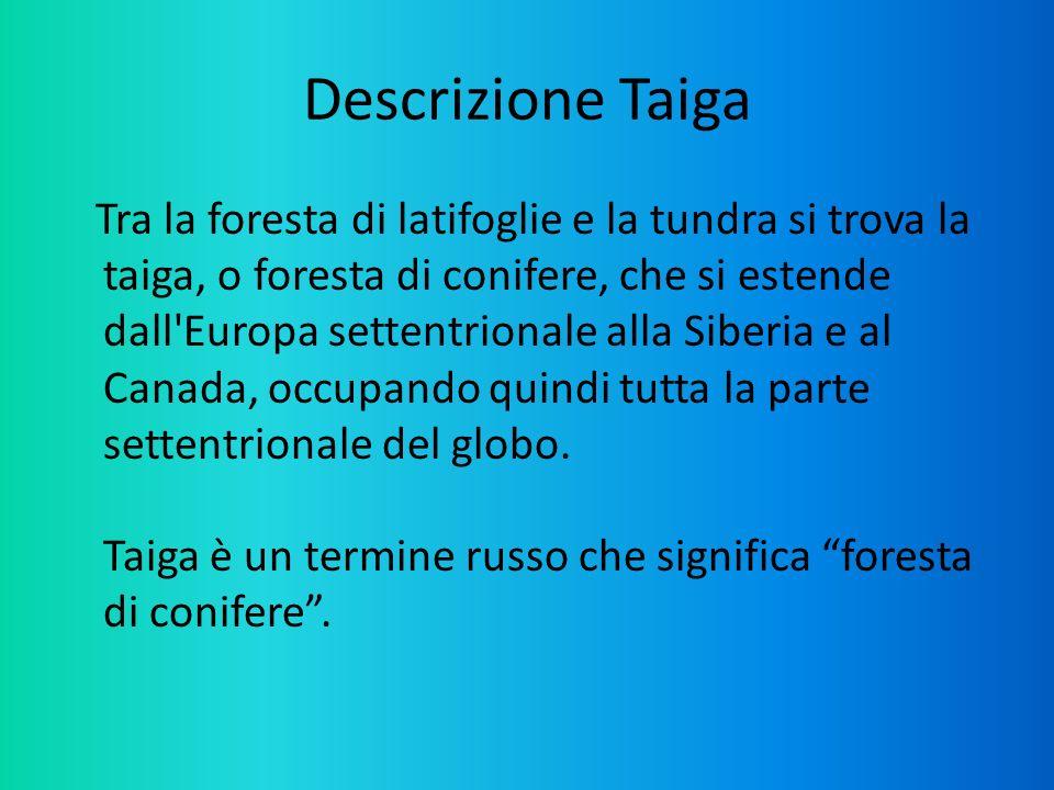 Descrizione Taiga
