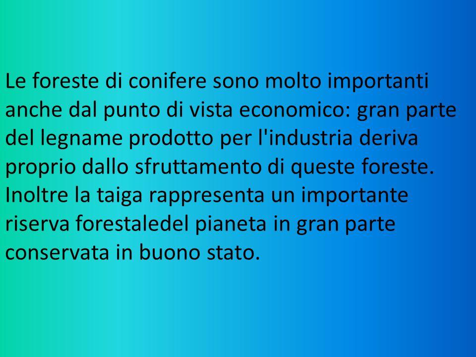 Le foreste di conifere sono molto importanti